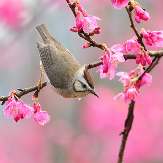 Spring-birds The Beauty of the Spring Season