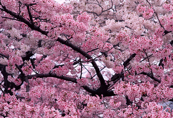 bloemen-spring The Beauty of the Spring Season