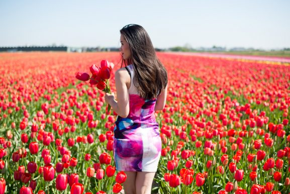 Tulip-fields-lisse-577x385 Weekend in Amsterdam